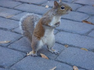 Are You Squirrelly?